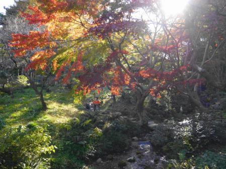 三溪園 紅葉 4