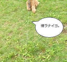 DSCF0478.jpg