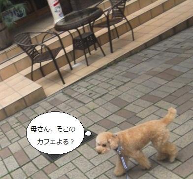 DSCF9546.jpg