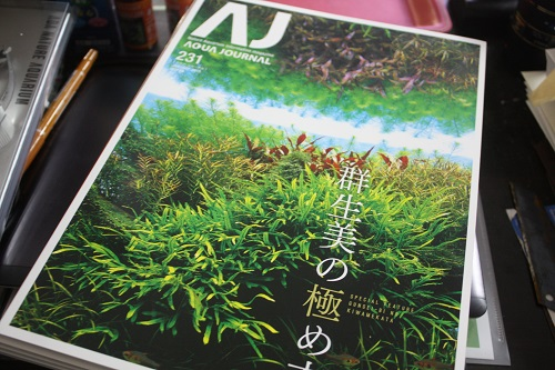 アクアジャーナル 東海 岐阜 熱帯魚 水草 観葉植物販売 Grow aquarium