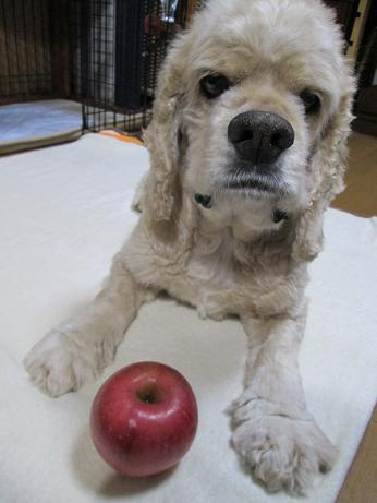 with an apple