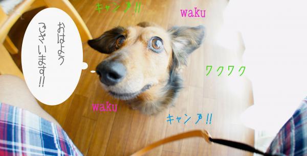 A1_convert_20121007181109.jpg