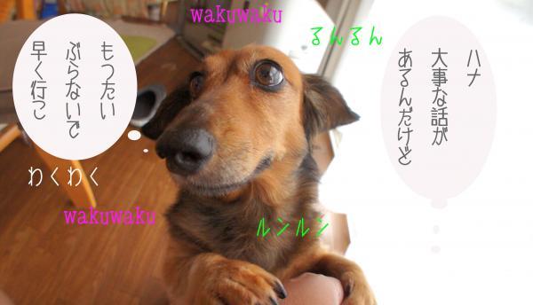 A2_convert_20121007181142.jpg