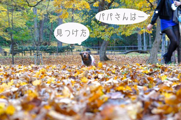 D20_convert_20121028170640.jpg