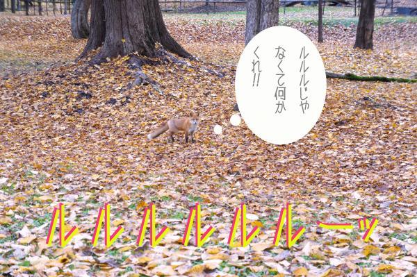 D9_convert_20121028170218.jpg