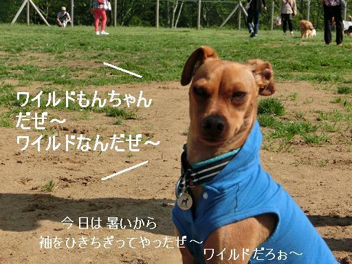 CIMG4164もんちゃん