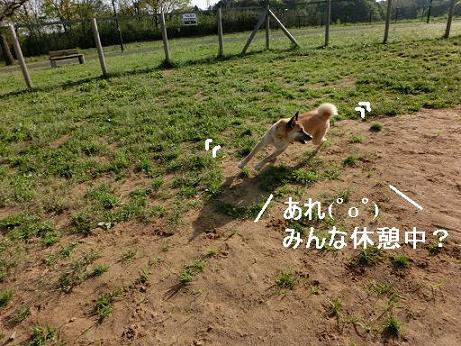 CIMG4244じゅうべえさん走る-9