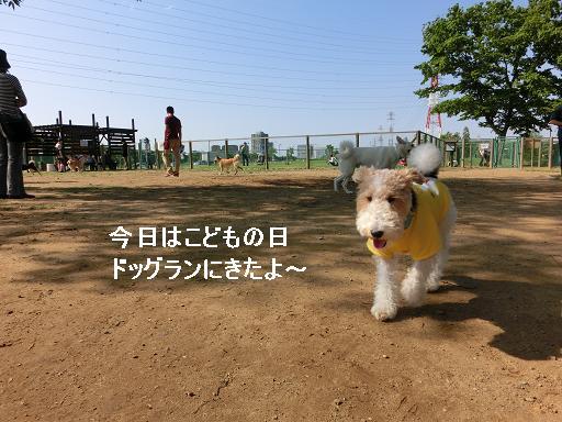 CIMG4657-1.jpg