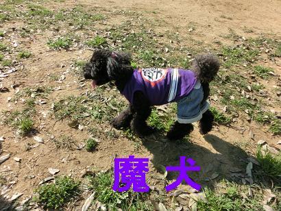 CIMG4664-6.jpg