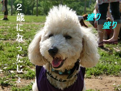 CIMG4678-2.jpg