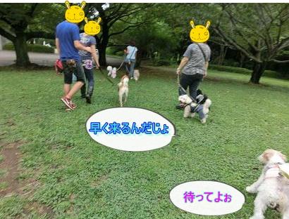 CIMG6633-10.jpg