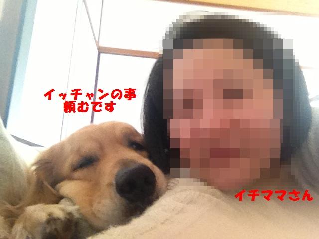 写真1 - コピー