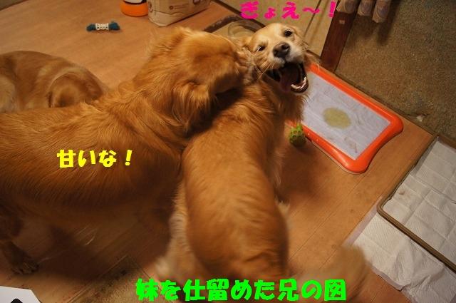 DSC02156_20141201224004a8b.jpg