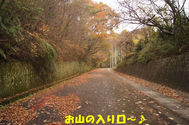 DSC02203.jpg