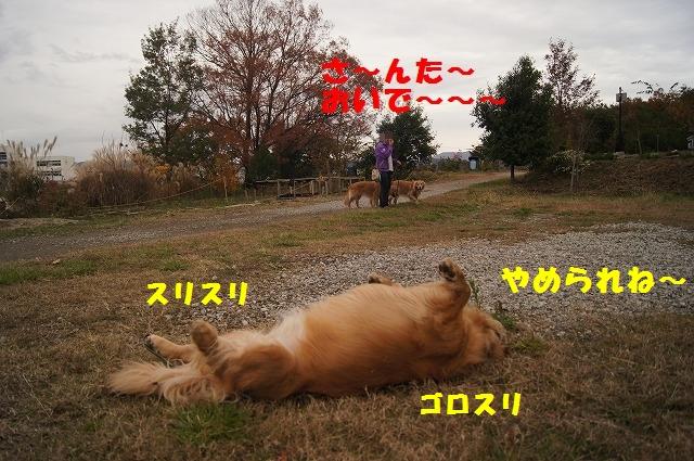 DSC02287.jpg