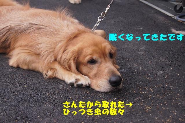 DSC02331_201412072245139e7.jpg