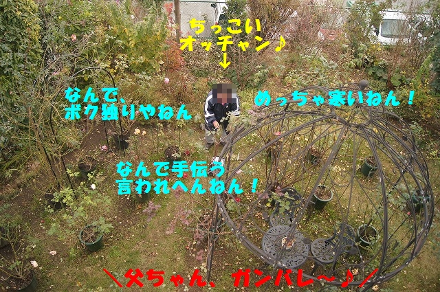 DSC02669.jpg