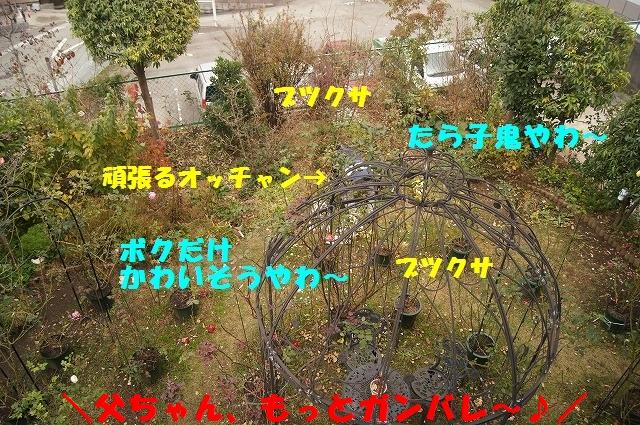 DSC02674_20141206142356c9d.jpg