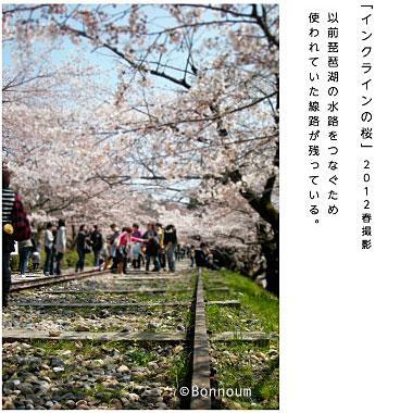 mantosrkyotosakura33.jpg