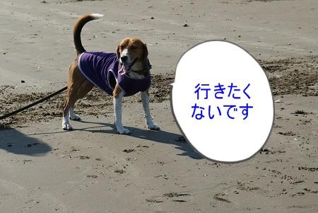 DSC00629_20121025001417.jpg