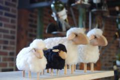 ドイツ 羊