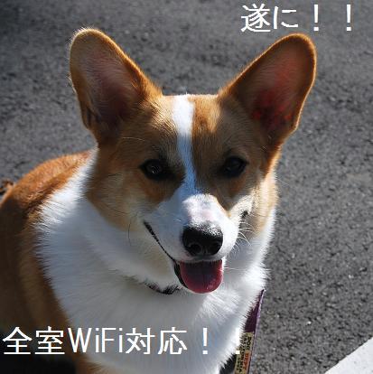 ren wifi