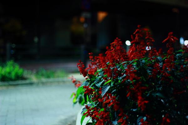 blog_IMG_1164.jpg