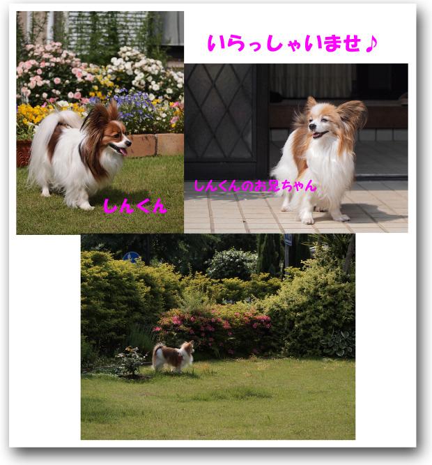 5301_20120613215750.jpg