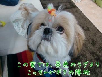 CIMG4045_4 (800x599)