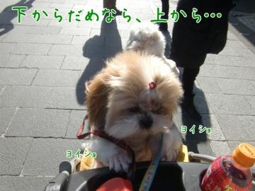 CIMG4137_4 (800x600)