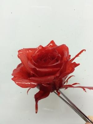 黄色のバラをレッドに染めました