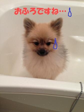 お風呂か…