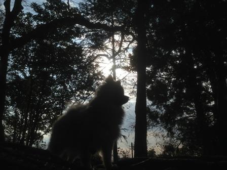 林に行ったりb