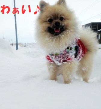 雪最高ですg