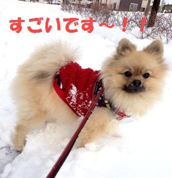 すごい雪ですh