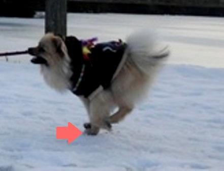 飛行犬?①j