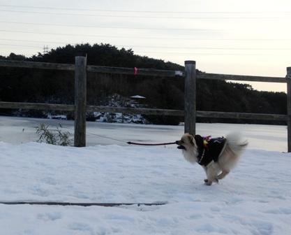 飛行犬①j