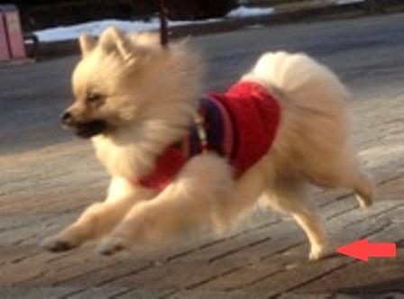 r飛行犬?