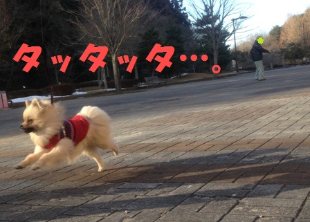 r飛行犬? - コピー