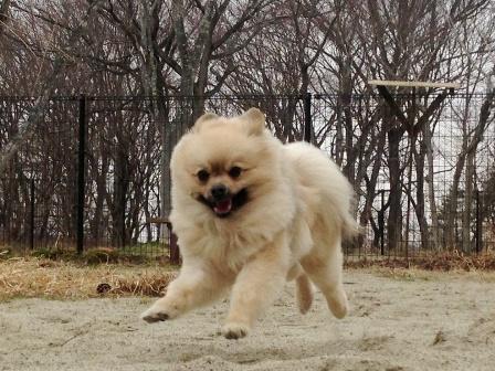 a飛行犬2
