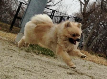 a飛行犬1