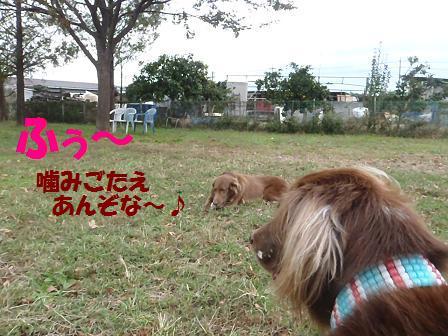コピー ~ SW25OCT12 110HANA