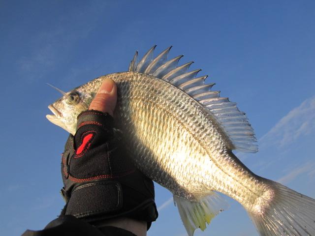 今年最後の魚類(>_