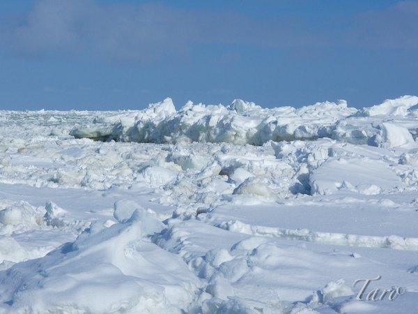 ウトロ 流氷