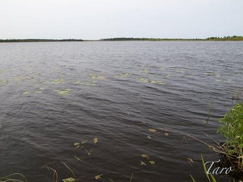 モケウニ沼