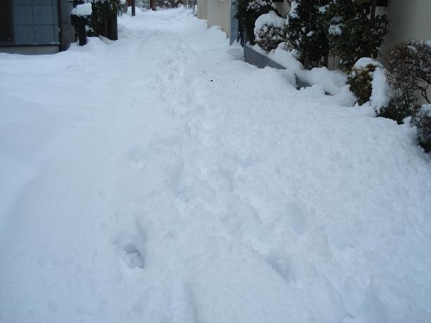 H26.2.15  120年振りの大雪ー2yuki