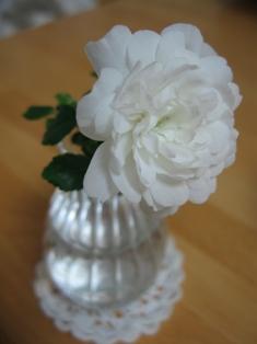 おうちのミニ薔薇