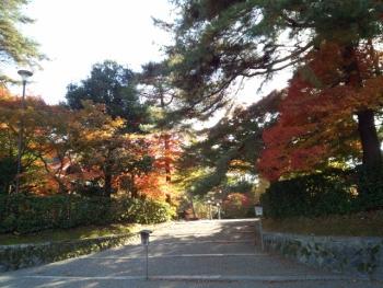 20141113紅葉~♪
