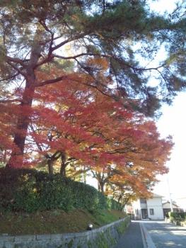 20141113紅葉~♪2