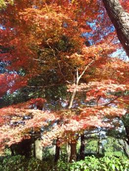 20141113紅葉~♪6